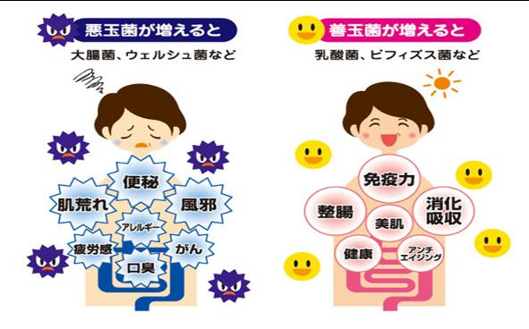 腸 内 環境 免疫 力